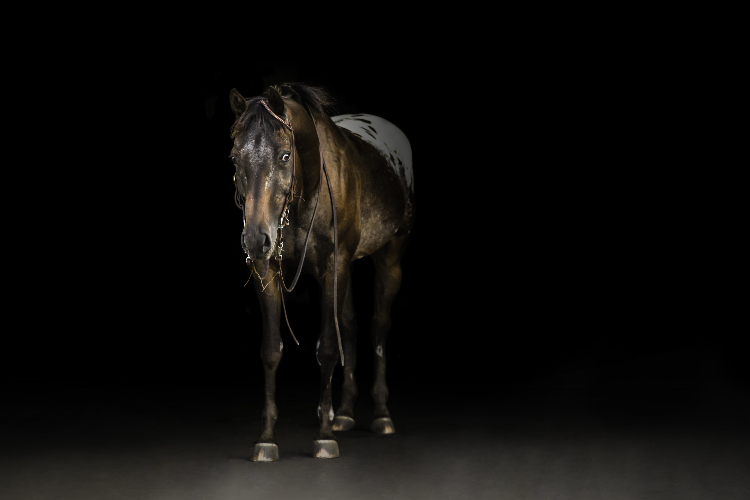 Black Background Horse Wisconsin