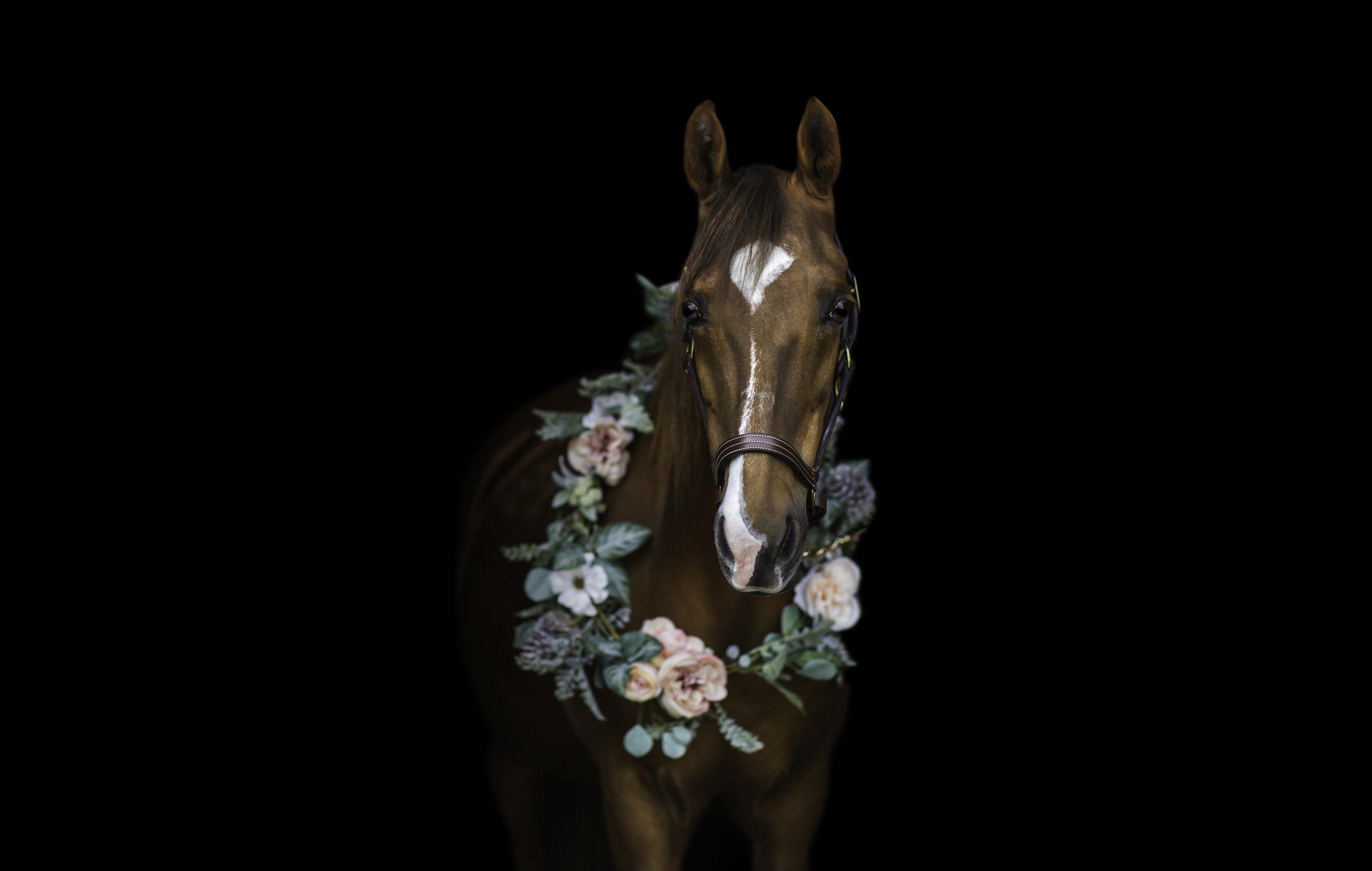 Equine Photographer Wisconsin