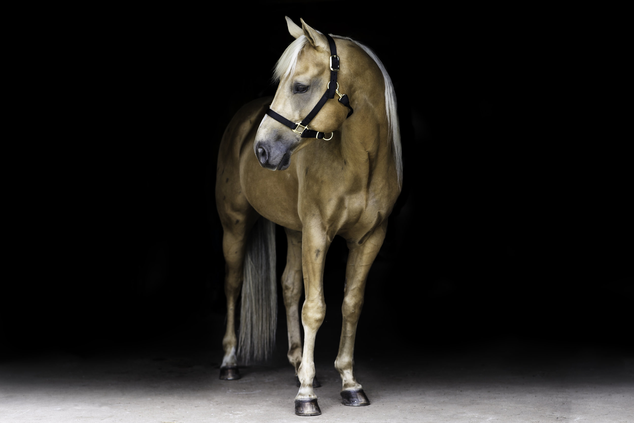 Horse Photographer Wisconsin