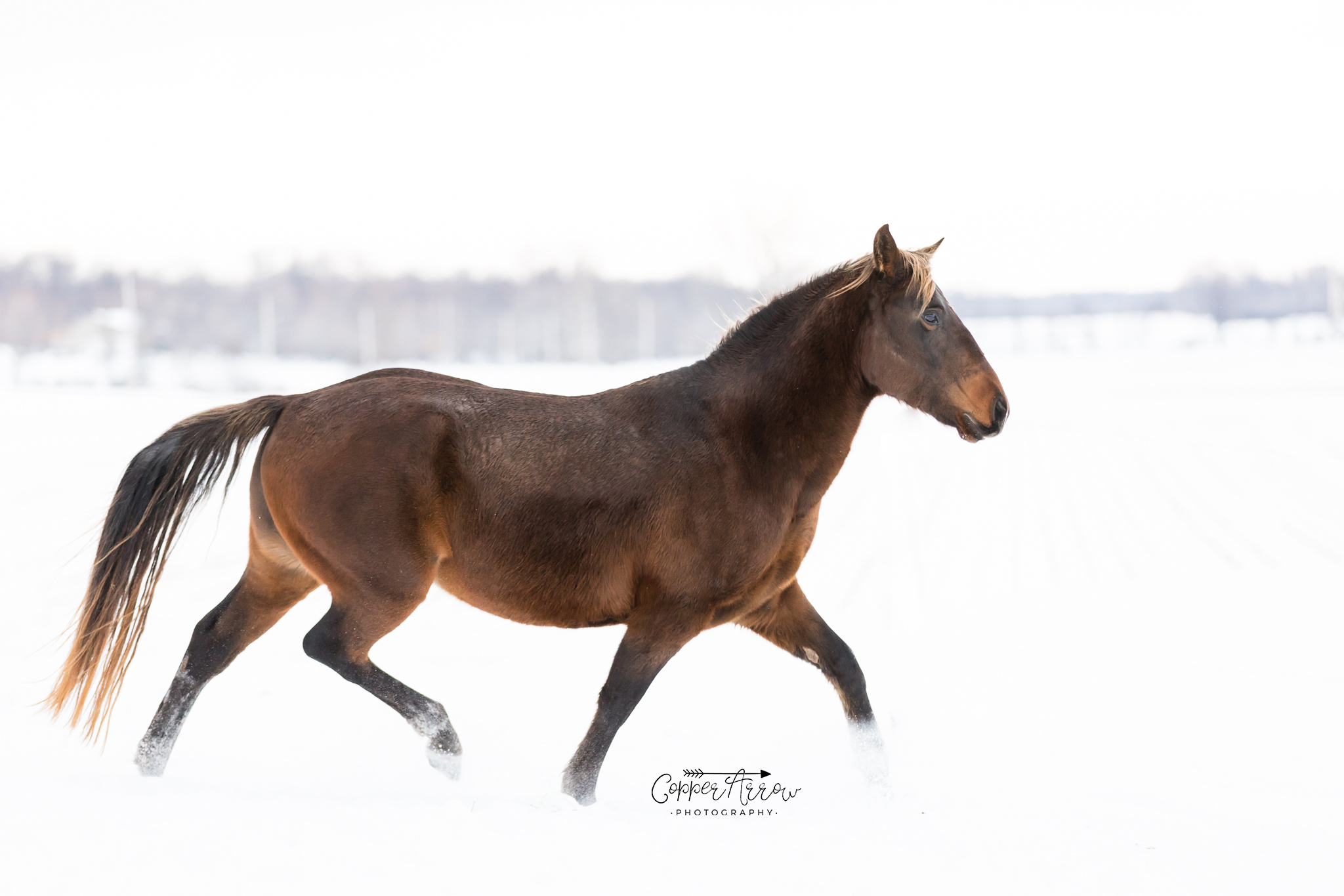 How to market a stallion