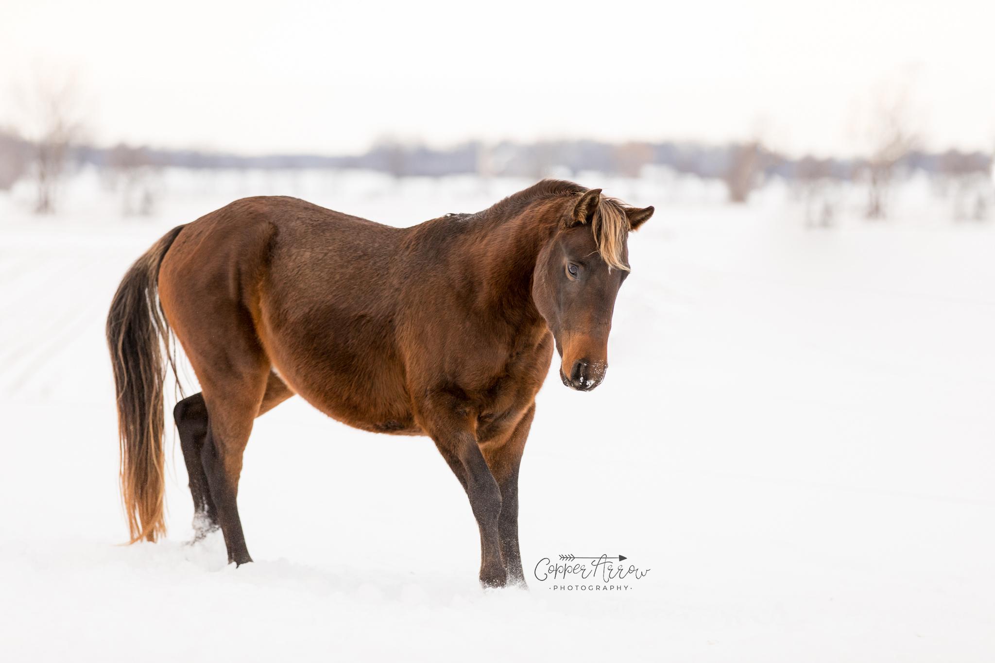 How to market my stallion