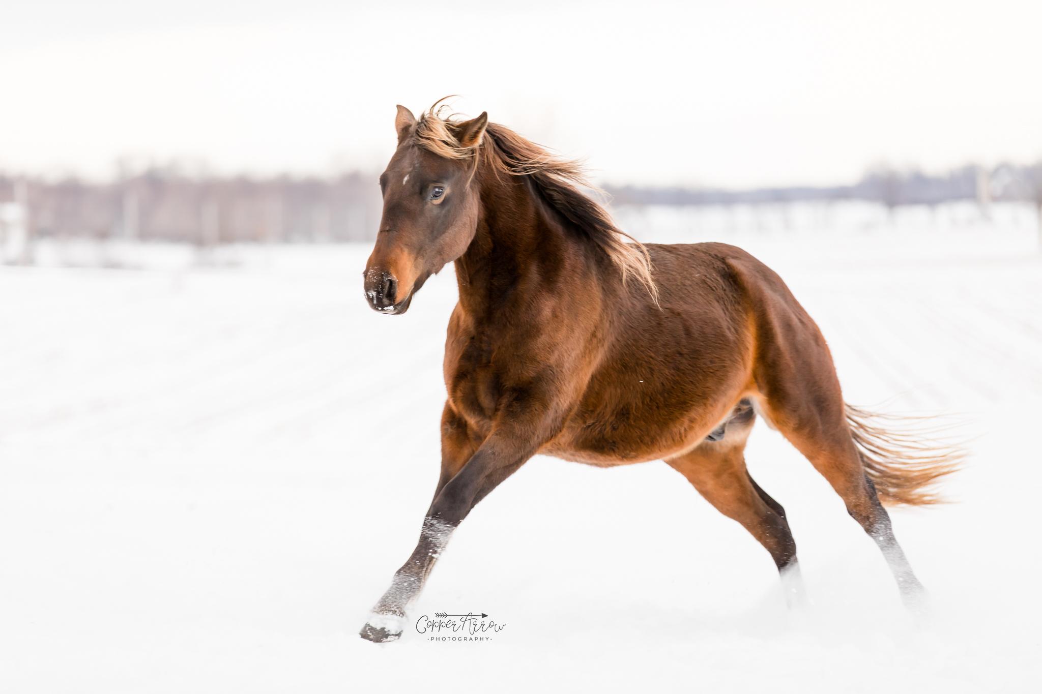 Marketing your stallion