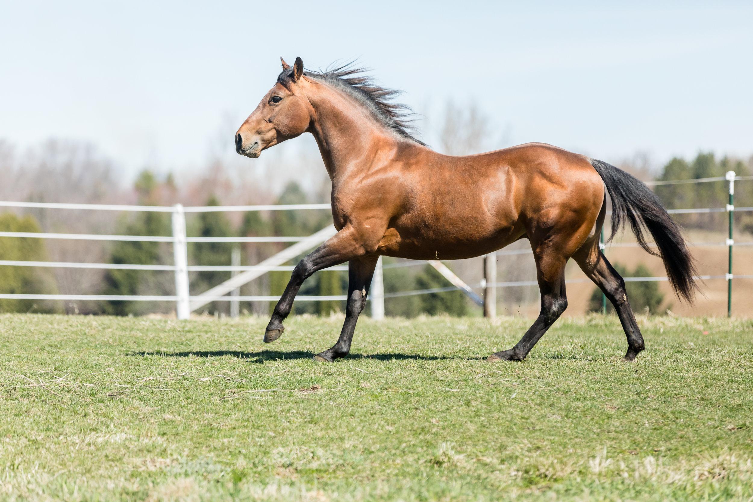 How to market your stallion