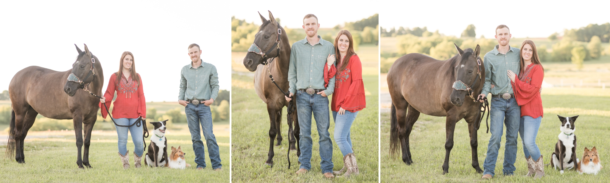 Family photos with horses and dogs