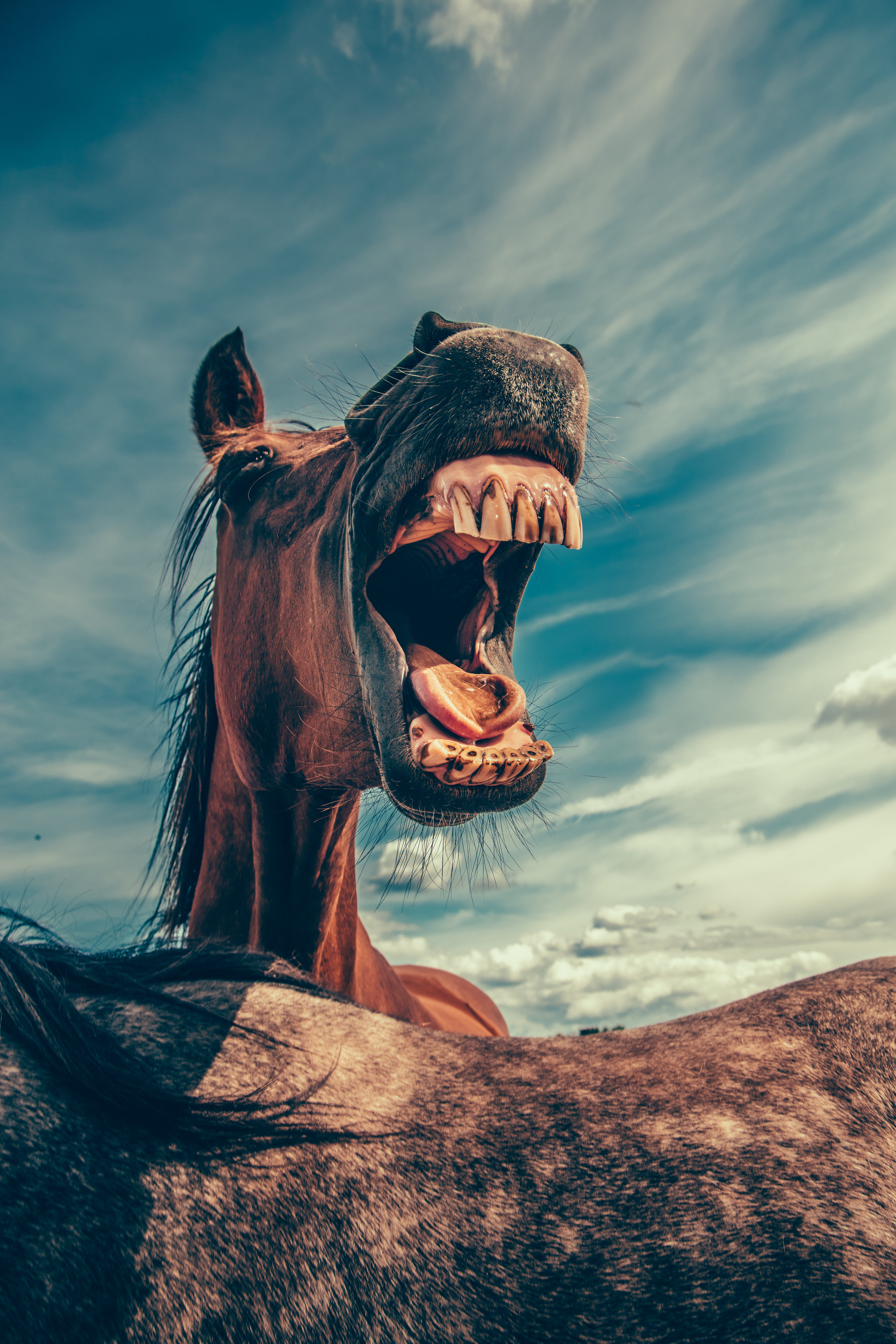 Straight from the horse's mouth: A guest excerpt from our DOO, Ester Harrison  Photo by Mikael Kristenson on Unsplash