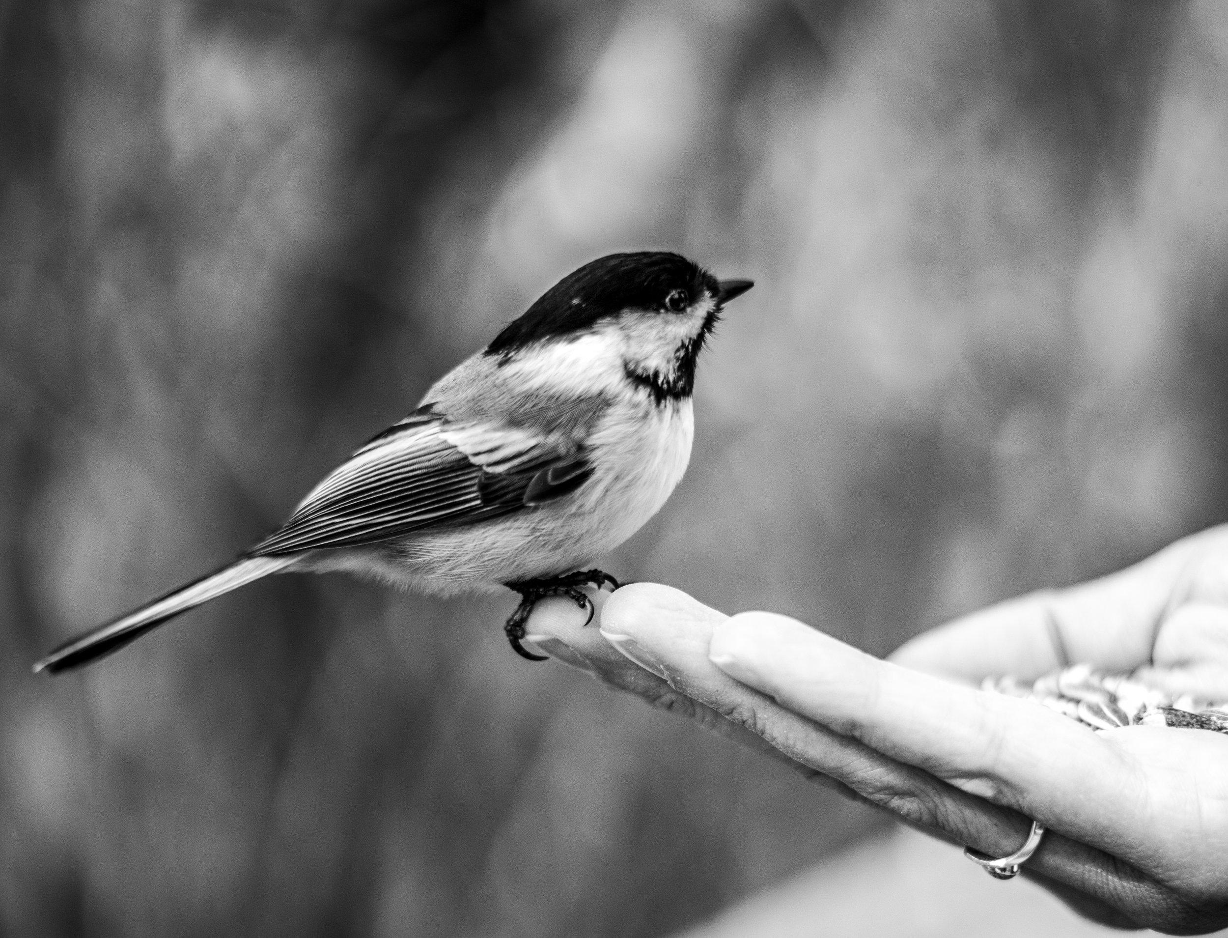 alliebird-4.jpg