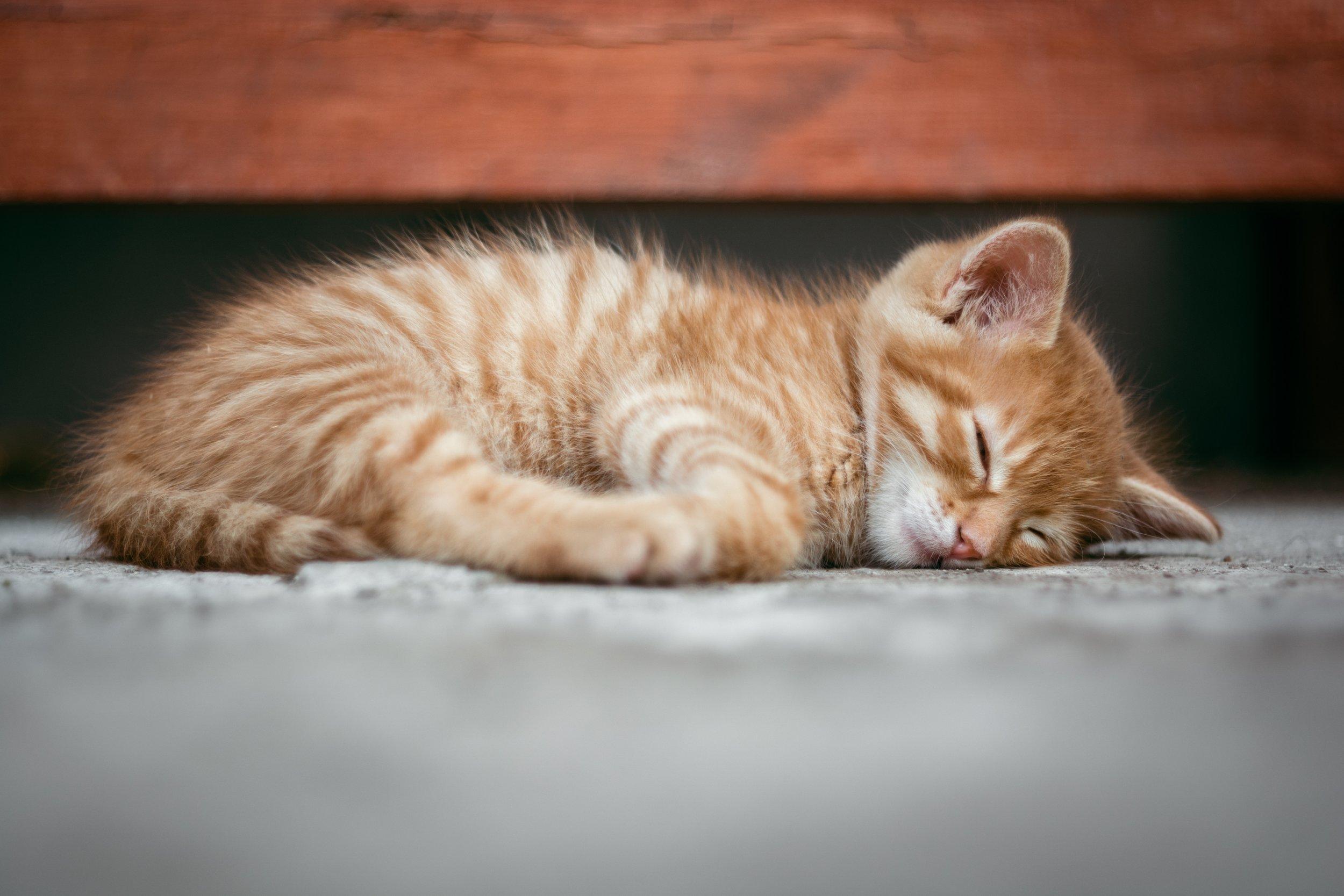 adorable-animal-baby-290164.jpg