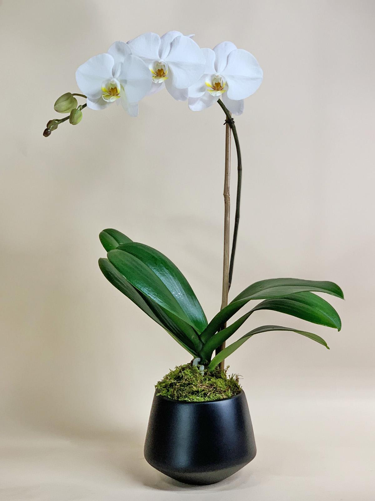 Single White in Ceramic Black Valve / $65