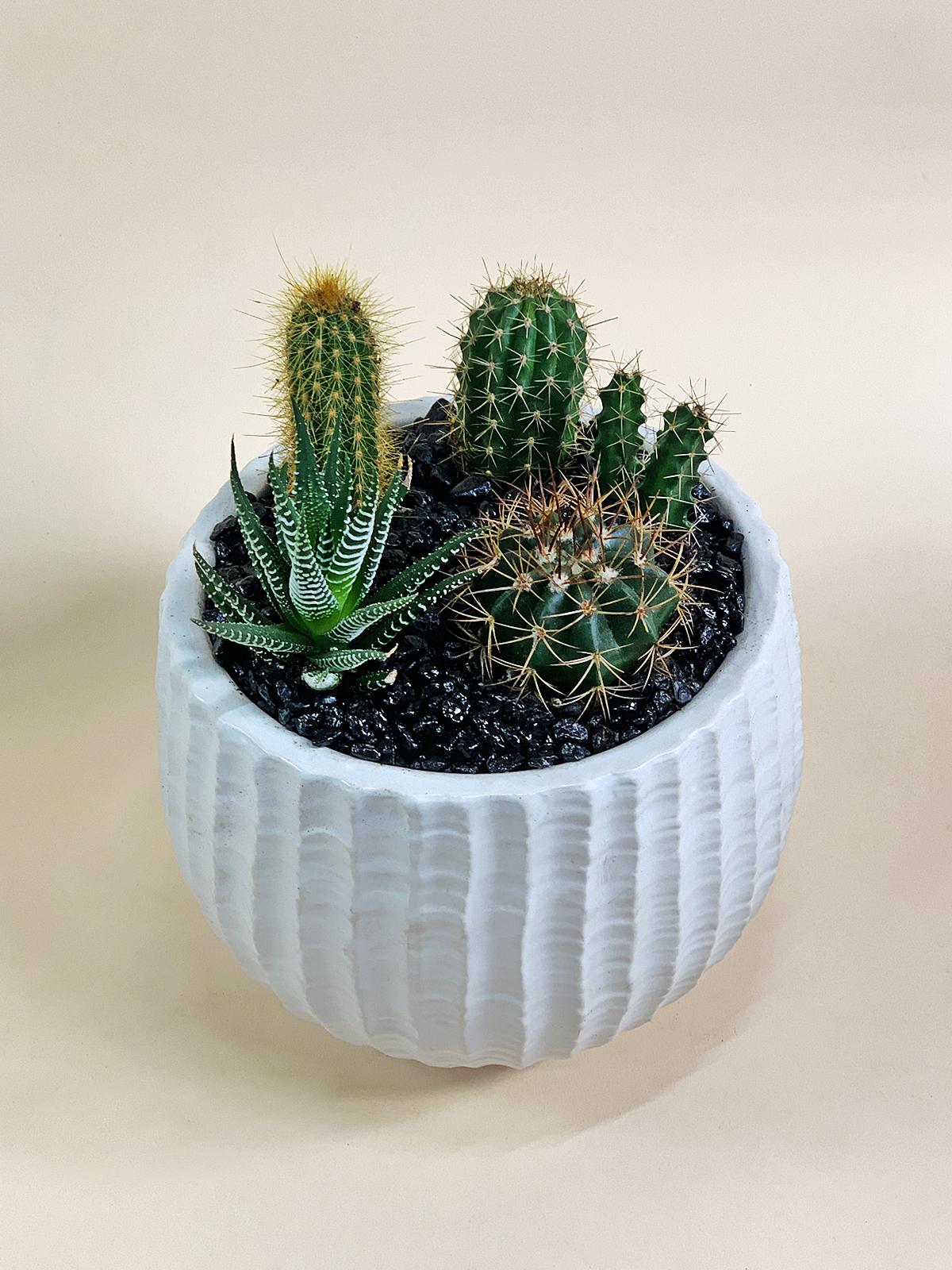 Cacti Paradise / $70