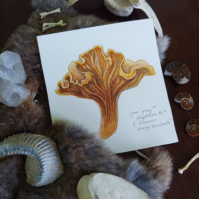 I'm still painting mushrooms for #mayshroom at my own pace... I have a feeling I'm going to stretch it out over the summer and maybe have a surprise for you all in the fall. Are there any mushrooms not in the list that you would have included?⠀ ⠀ I just added a bunch of the original mushroom paintings to my shop, so if you were looking to bring some magic into a special place in your house, it's time! (L!nk in B!o)⠀ ⠀ #occultism #occultartists #occultist #witchesofinstagram #witchyvibes #witchaesthetic #witchlife #witchylife #witchessociety #witchvibes #witchsociety #witchythings #witchy #witchcraft #witchery #mushrooms #mushroomhunting #botanicalart #ediblemushrooms #foraging #newengland #darkart #darkartists