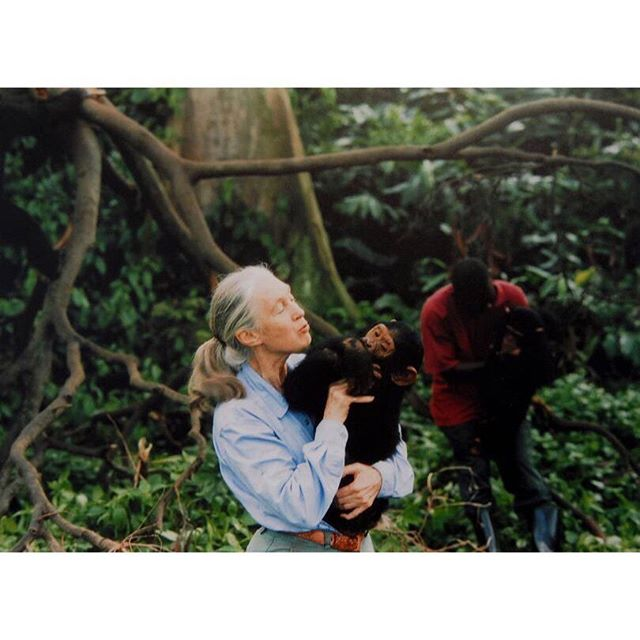 Our #WCW is @janegoodallinst , an icon of the conservation world and an all round force for good, not to mention a wonderful shirt wearer... this week she was an interviewee of Prince Harry - have a look online now @britishvogue - pictures taken from there. As we've always said, the joy of a shirt is you can throw it on and get on with tackling real problems. 💙