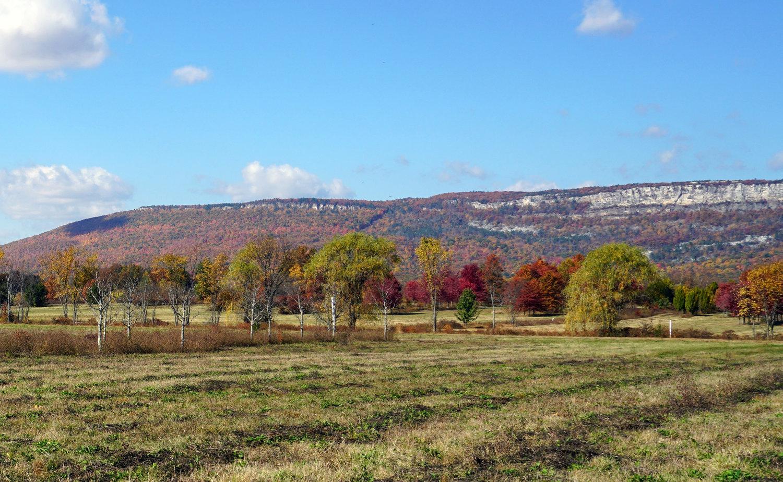 fall+field+view.jpg