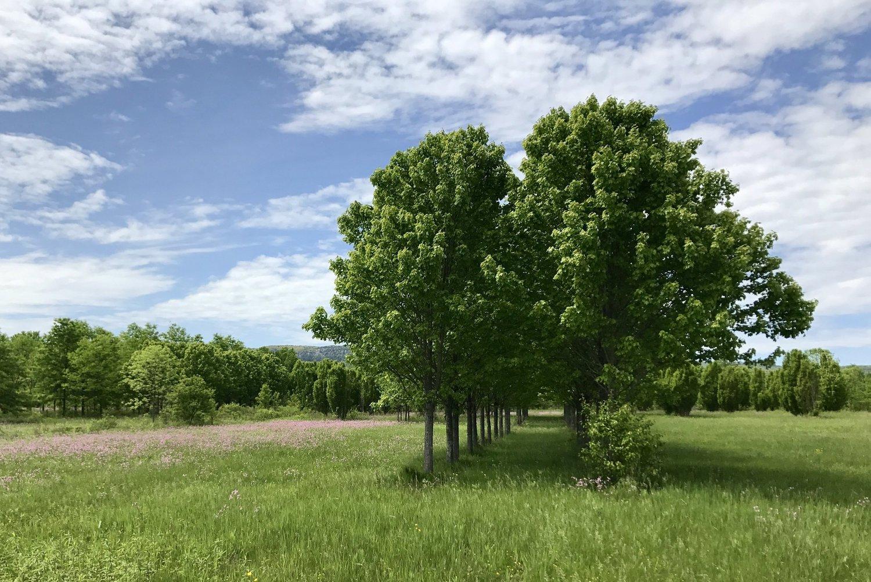 row+of+trees.jpg