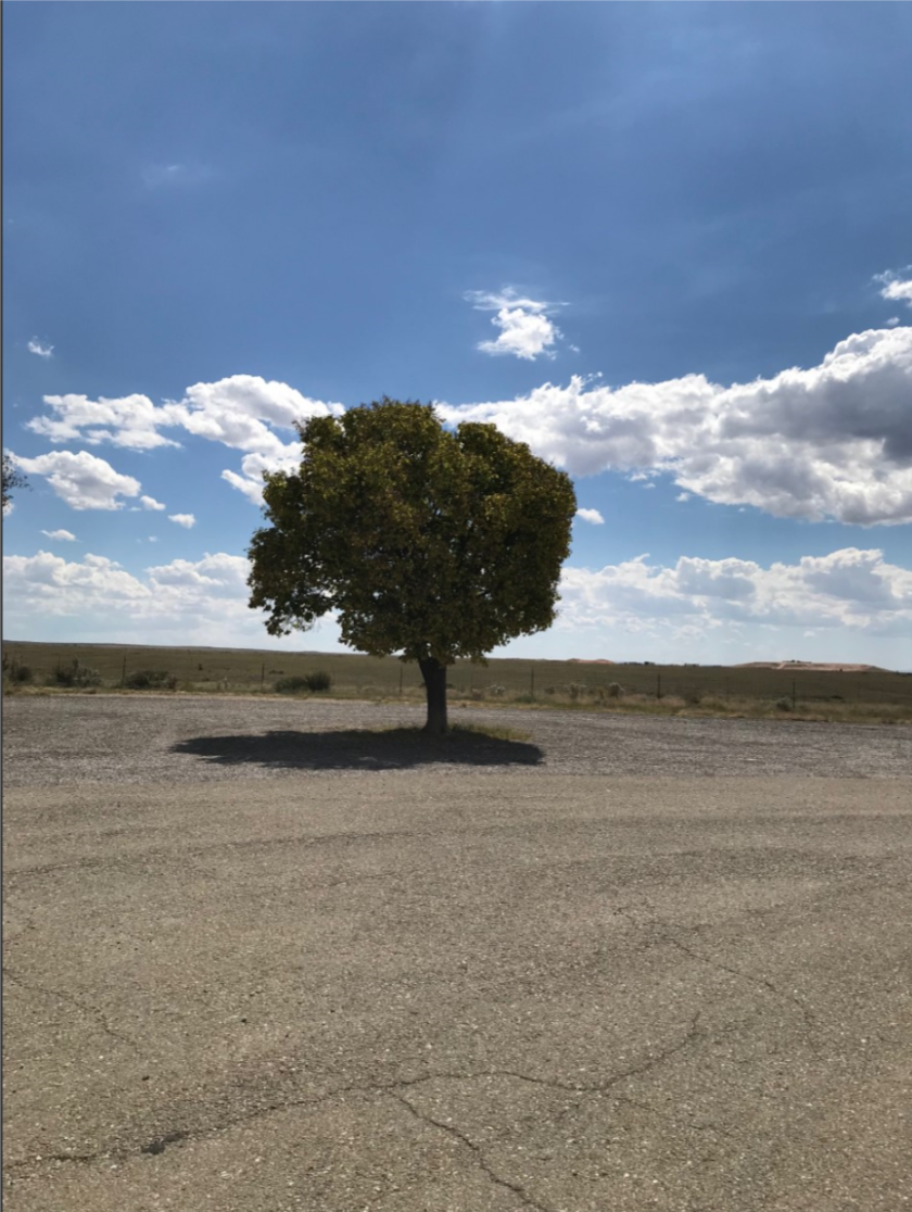 66 lonesome tree.png