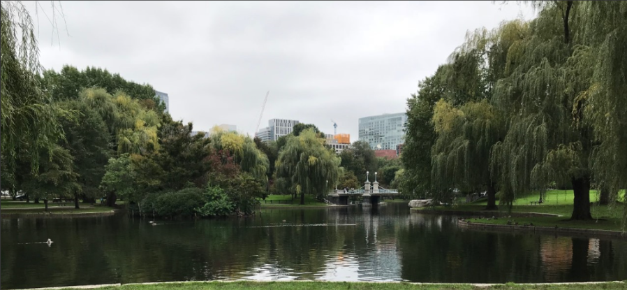 public garden pond view.png