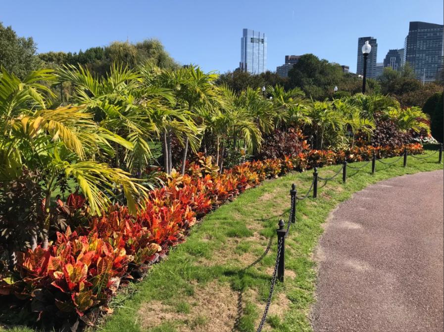 public garden installtion fall.png