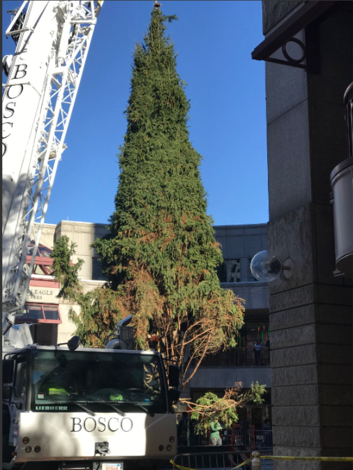 city life xmas tree faneuil hall arrives.png