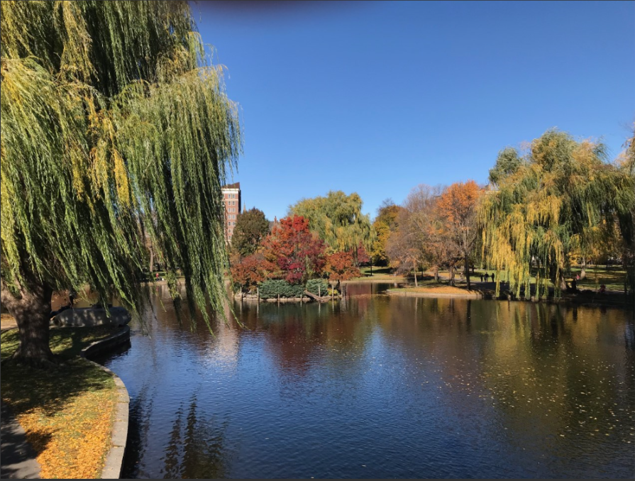 public garden fall pond view.png