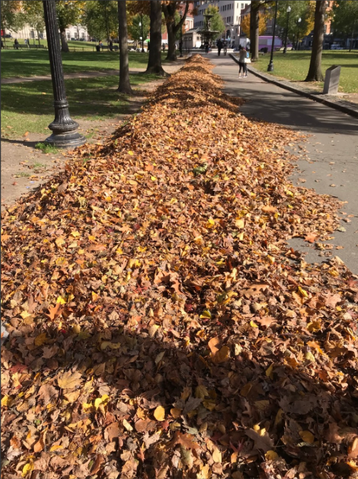 leaves of autumn on common.png