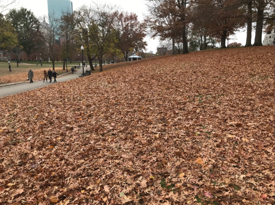 boston common fall leaves.png