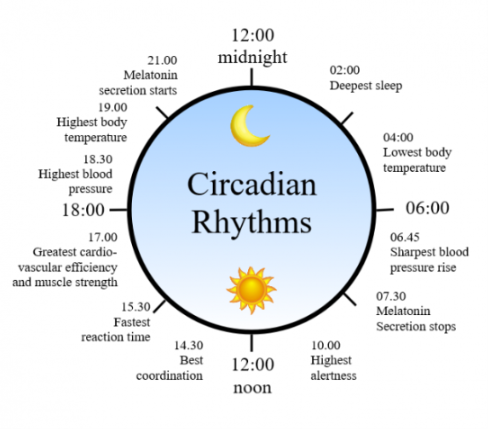 Sleep timing depends greatly on  hormonal  signals from the circadian clock, or Process C, a complex neurochemical system which uses signals from an organism's environment to recreate an internal day–night rhythm.