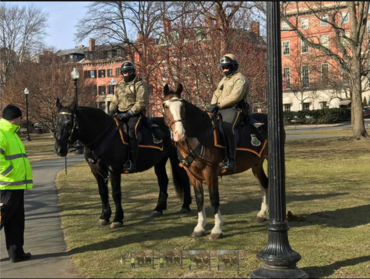 A very popular sight in the Public Garden. Proud Park Rangers, Crowley on left and Ranger Rochon on right. And their gelding partners, Winston on the left and Liberty on the right. How proudly they stand. How tolerant they are of children and adults alike. How lucky we are to have such strong symbols of our great city and country.
