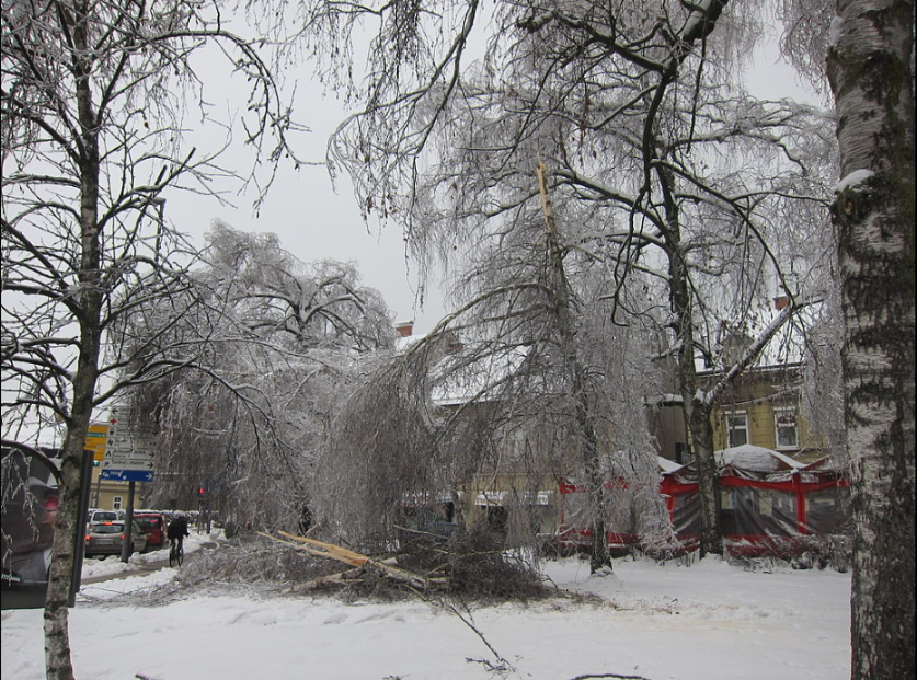 Tree downed due to a thick layer of glaze in downtown  Ljubljana ,  Slovenia .