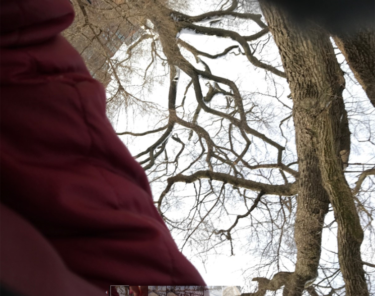winter walk branches.png