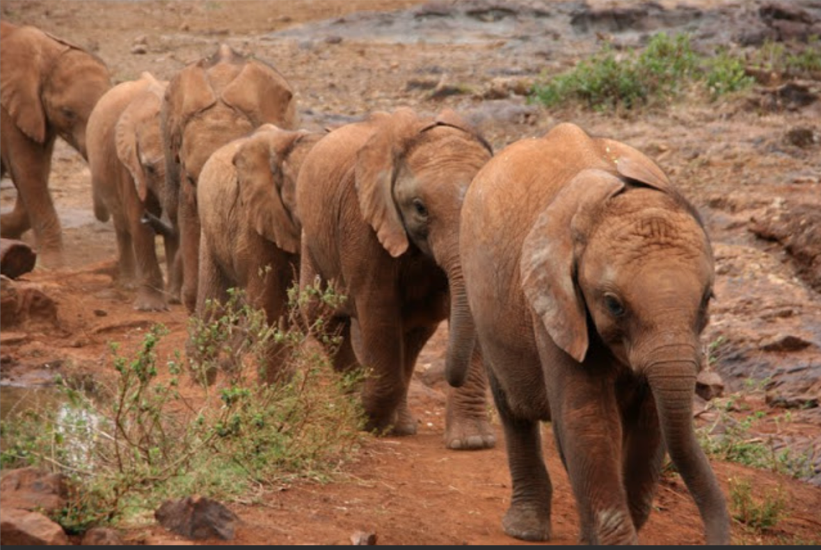 What did the Roman picket say when he saw Hannibal leading the elephants down the Alps?  Here come da elephants.