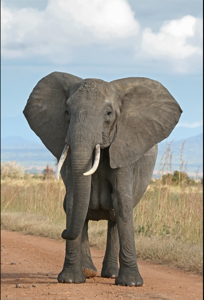 What did the grape say when the elephant stepped on it?  Said nothing.  Just gave a little wine.