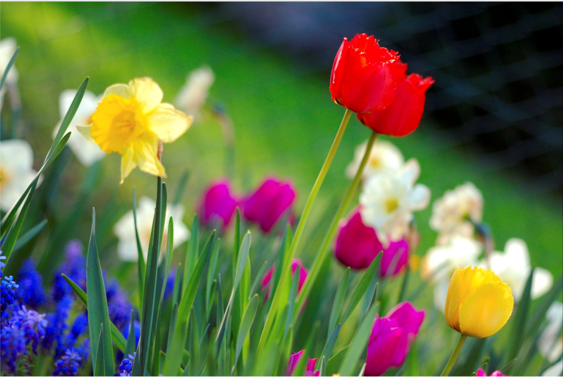 Colorful spring garden flowers Anita Martinz from Klagenfurt, Austria - Colorful spring garden