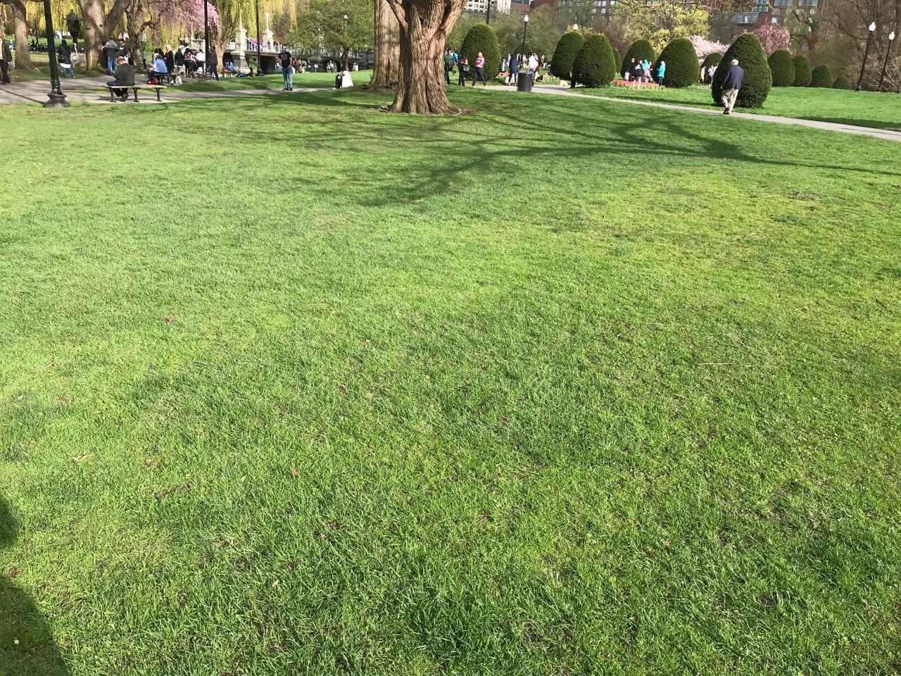 renewlal grass II.jpg