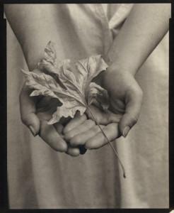 maple-leaf-hand-246x300.jpg