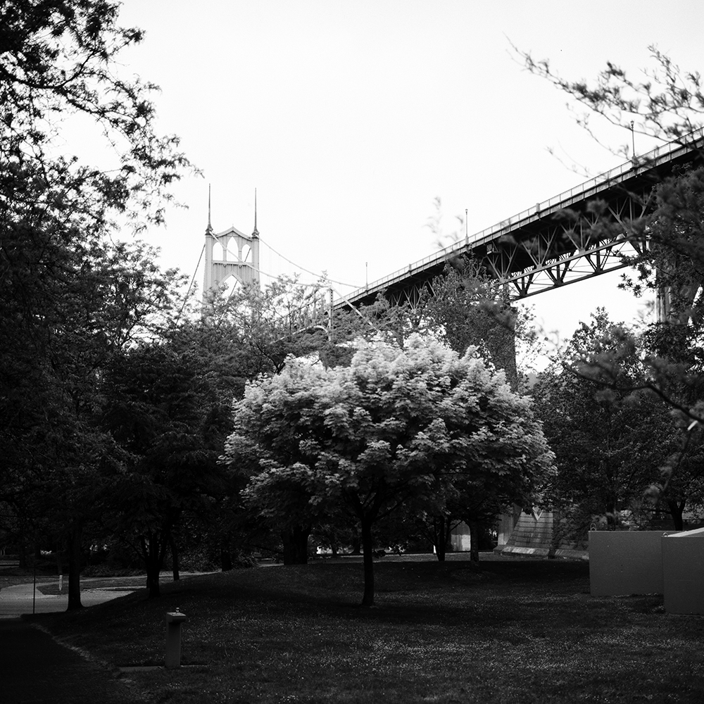 CatLABS X 80 film unfiltered photographing a bright, green tree under the St. Johns Bridge.
