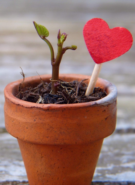 flowerpot-2756428_1920.jpg