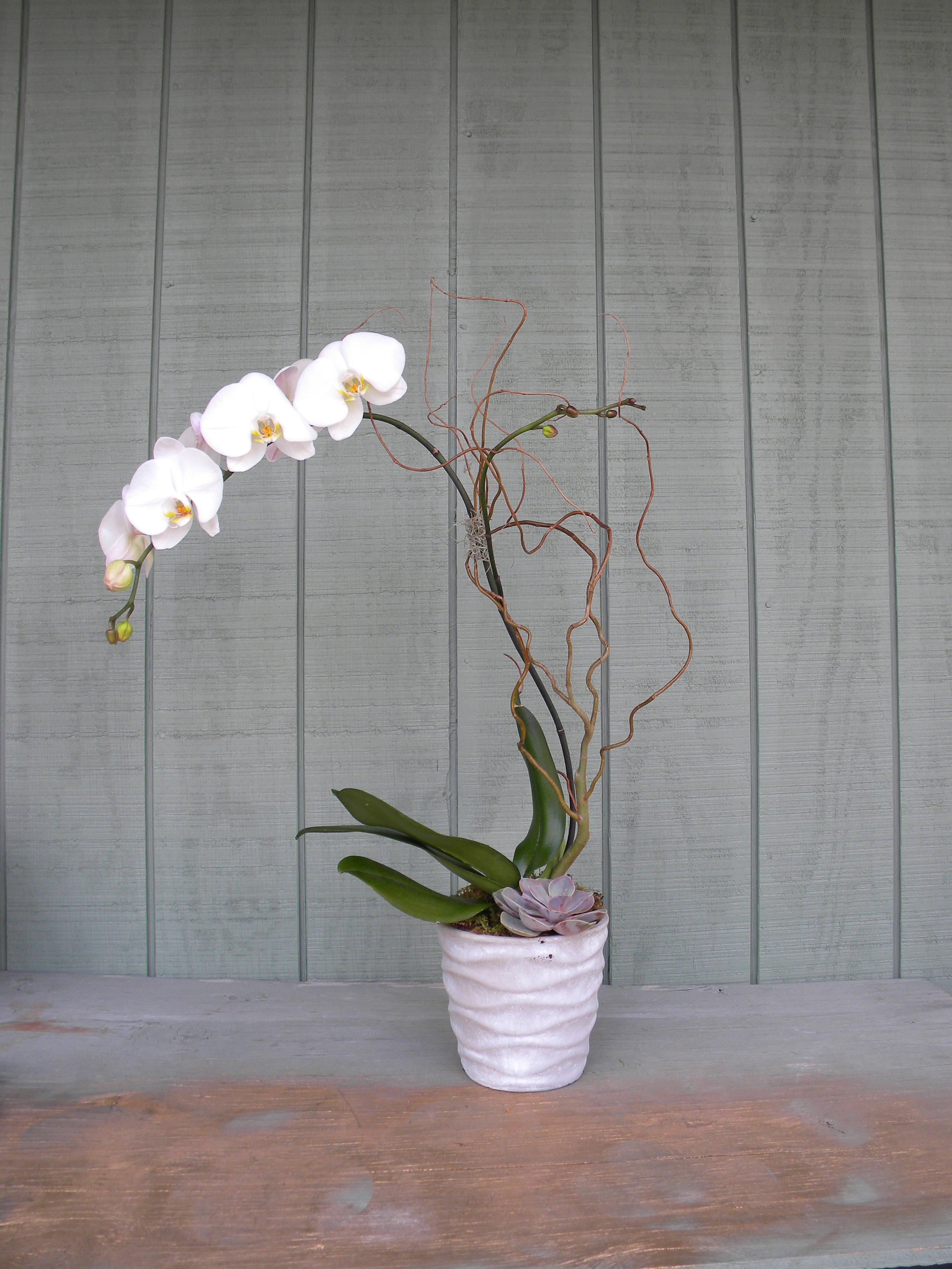 100dollarorchid.jpg