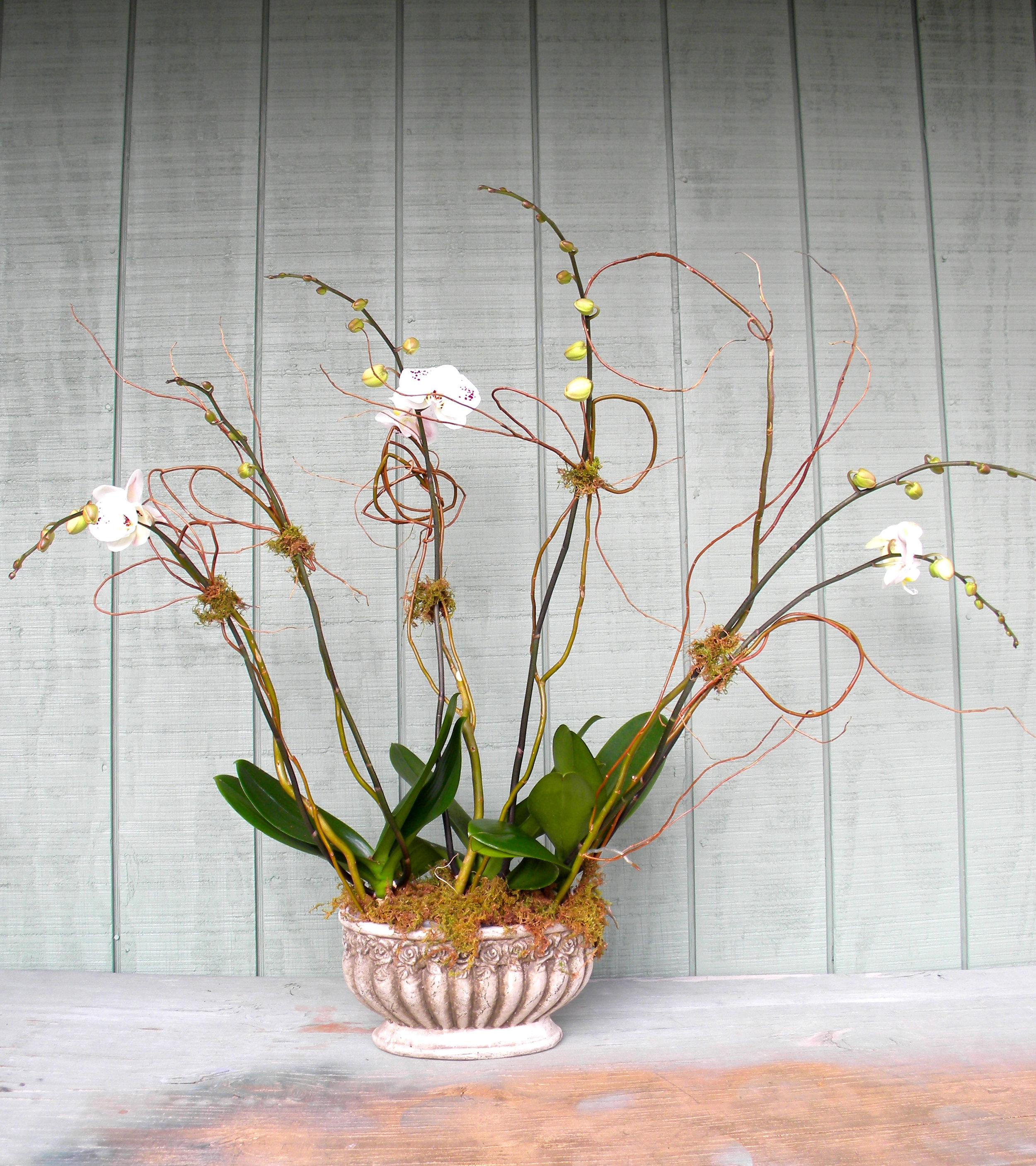150dollar orchid.jpg