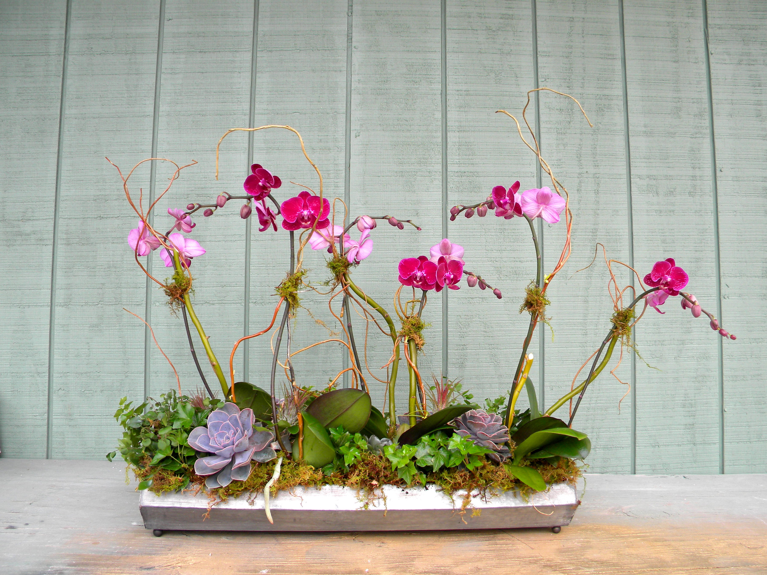 small pink orchids and succulents.jpg
