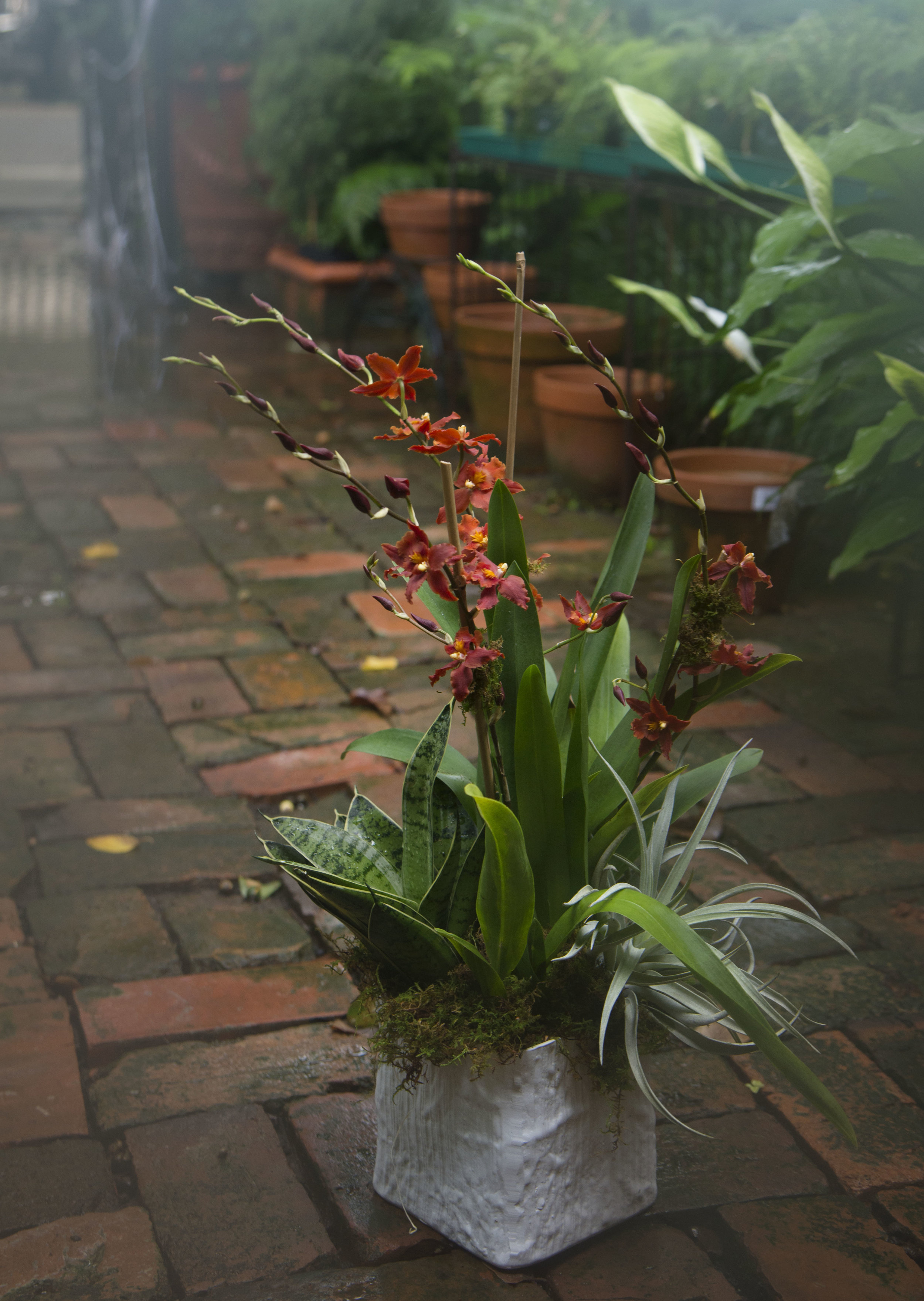 new variety of orchids at mitchs flowers new orleans.jpg