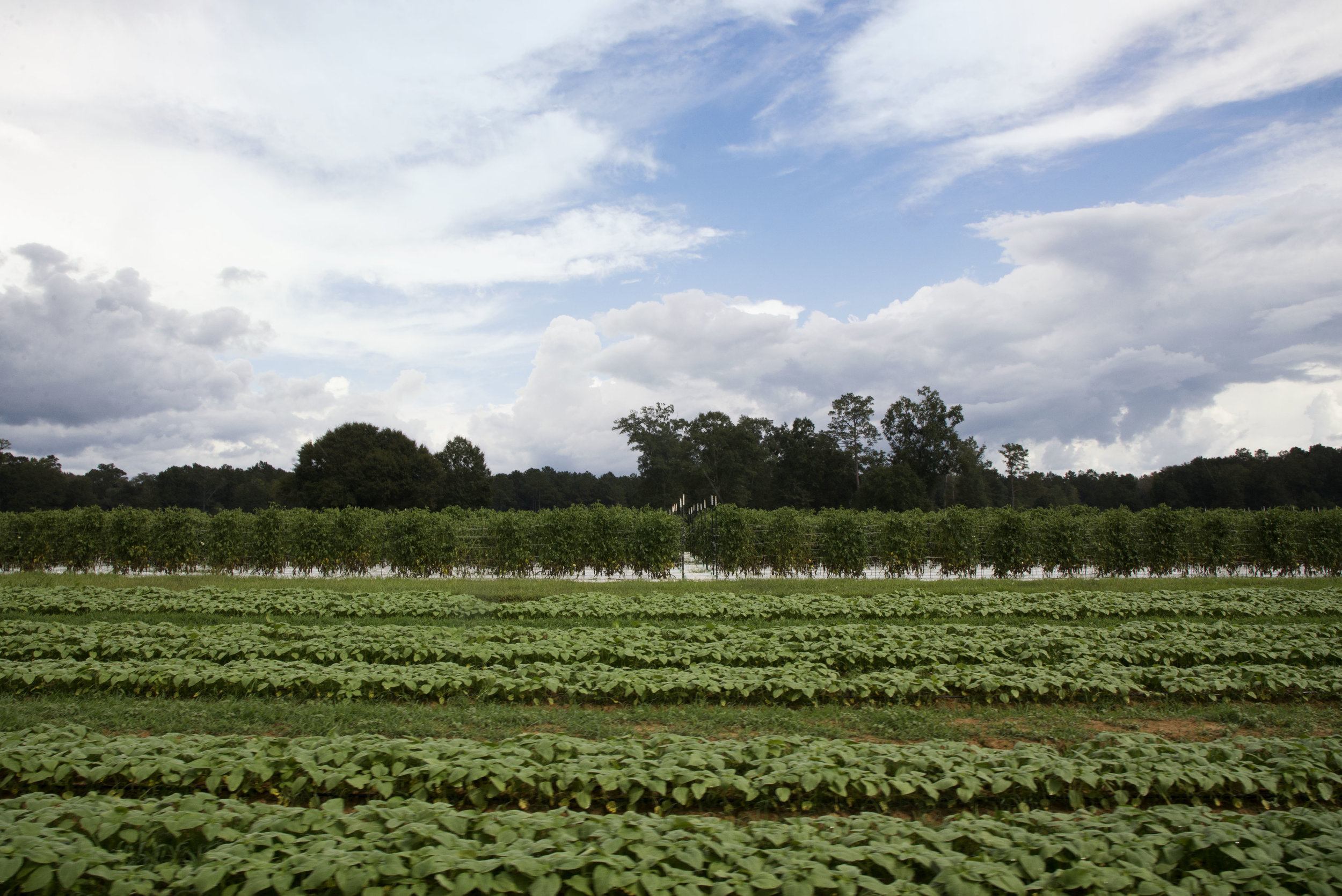 covey rise farms.jpg