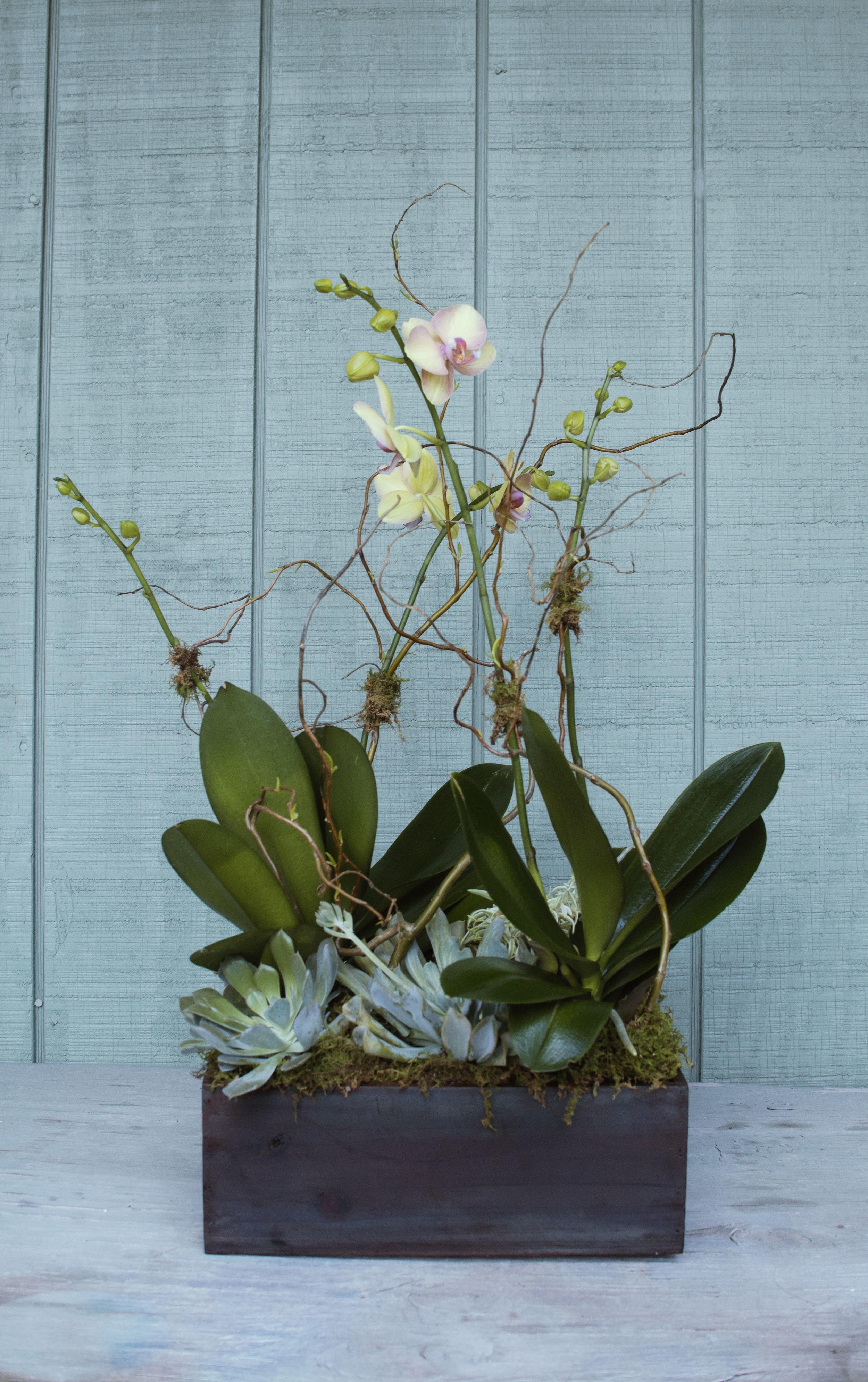 stunner orchids pink.jpg
