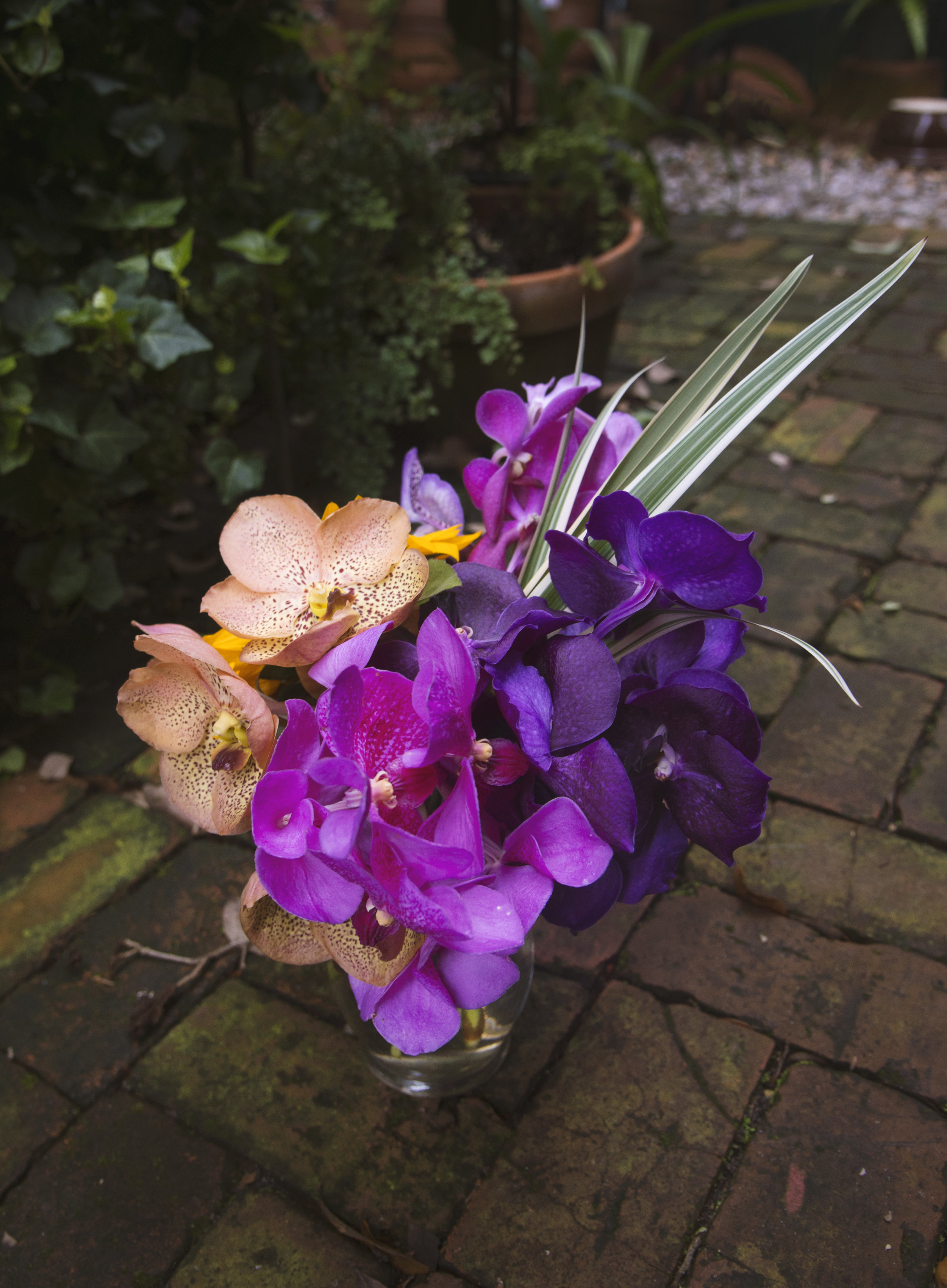 VANDA ORCHID mitchs flowers delivery near me new orleans stpehanie tarrant monique chauvin buckeye orchids VANDA ORCHID ARRANGEMENT.jpg