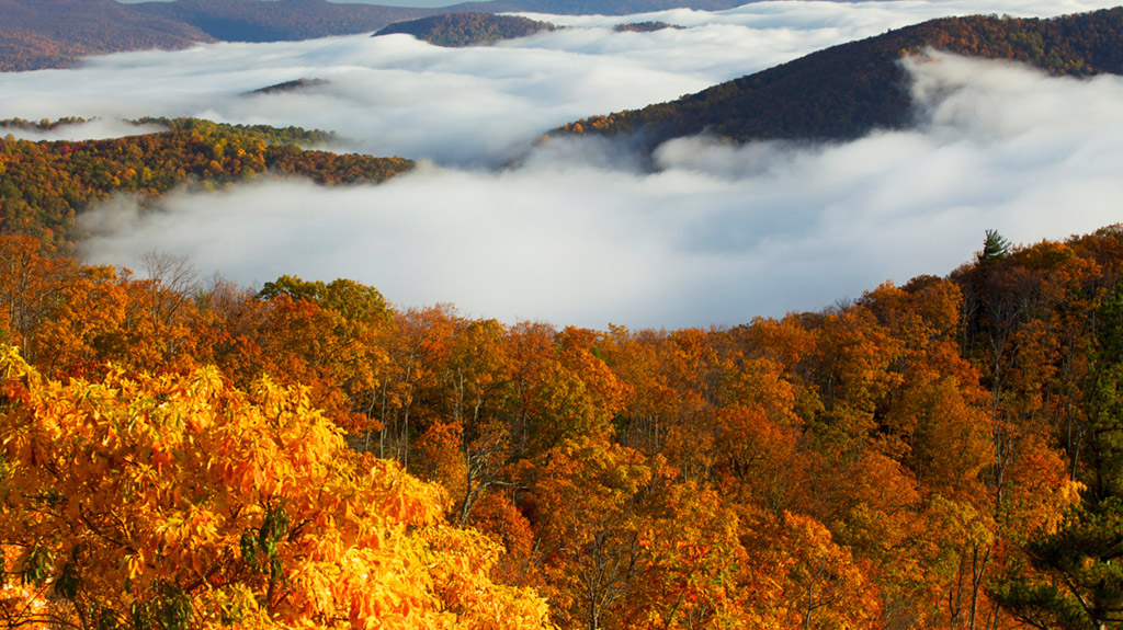 Turning Leaves in the Shenandoah (Getty Images)