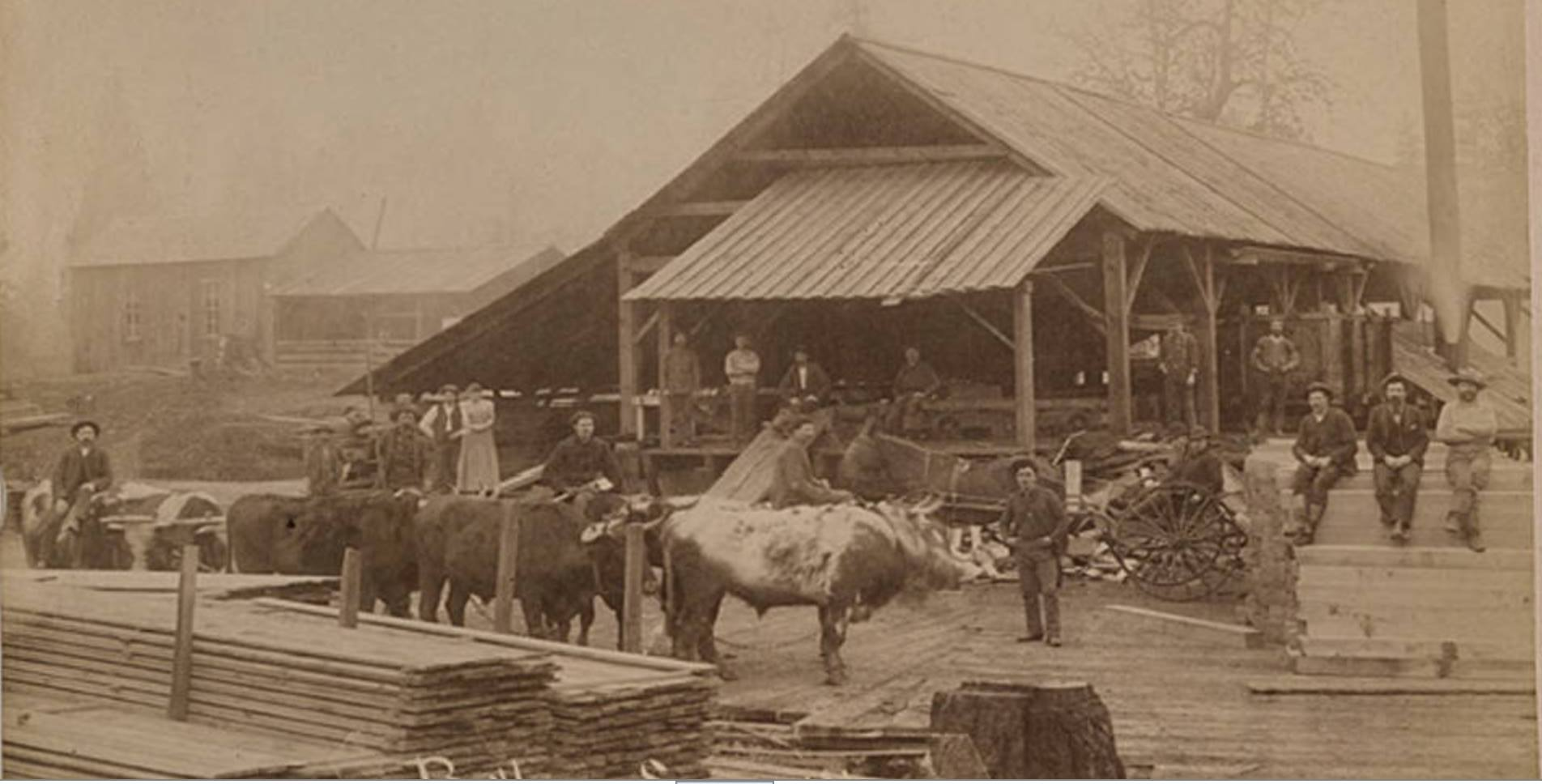 ISACC BUTLER HAD ONE OF THE FIRST SAW MILLS IN WASHINGTON COUNTY AND IN THE TUALATIN VALLEY WHICH WAS POWERED BY OXEN TO TURN THE SAW BLADES. THE LOCATION WAS REPORTED TO HAVE BEEN ALONG ROCK CREEK AT THE SW CORNER OF WHAT BECOME THE CITY OF ORENCO. PICTURE COURTESY OF THE WASHINGTON COUNTY MUSEUM.