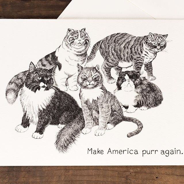 Happy Presidents' Day.  #cat #catstyle #purr