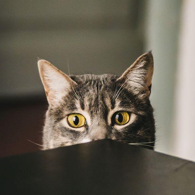 Mmmm, cereal.  #morningcat #breakfastcat #catlove