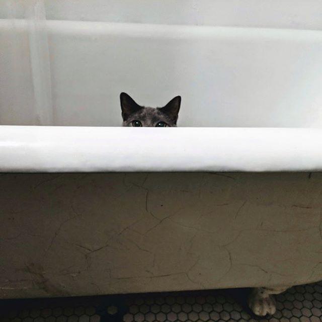 Where's Nemo? #catlove #cat