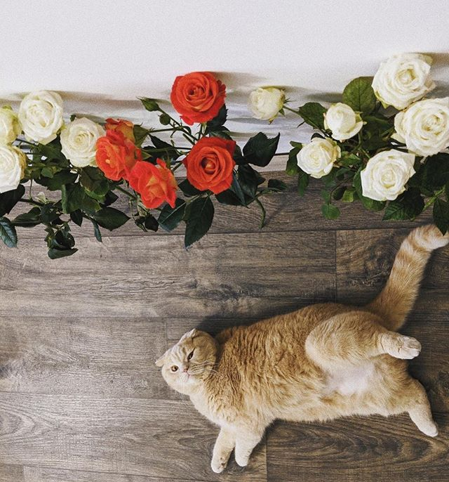 The siren.  #catlove #weekendcat