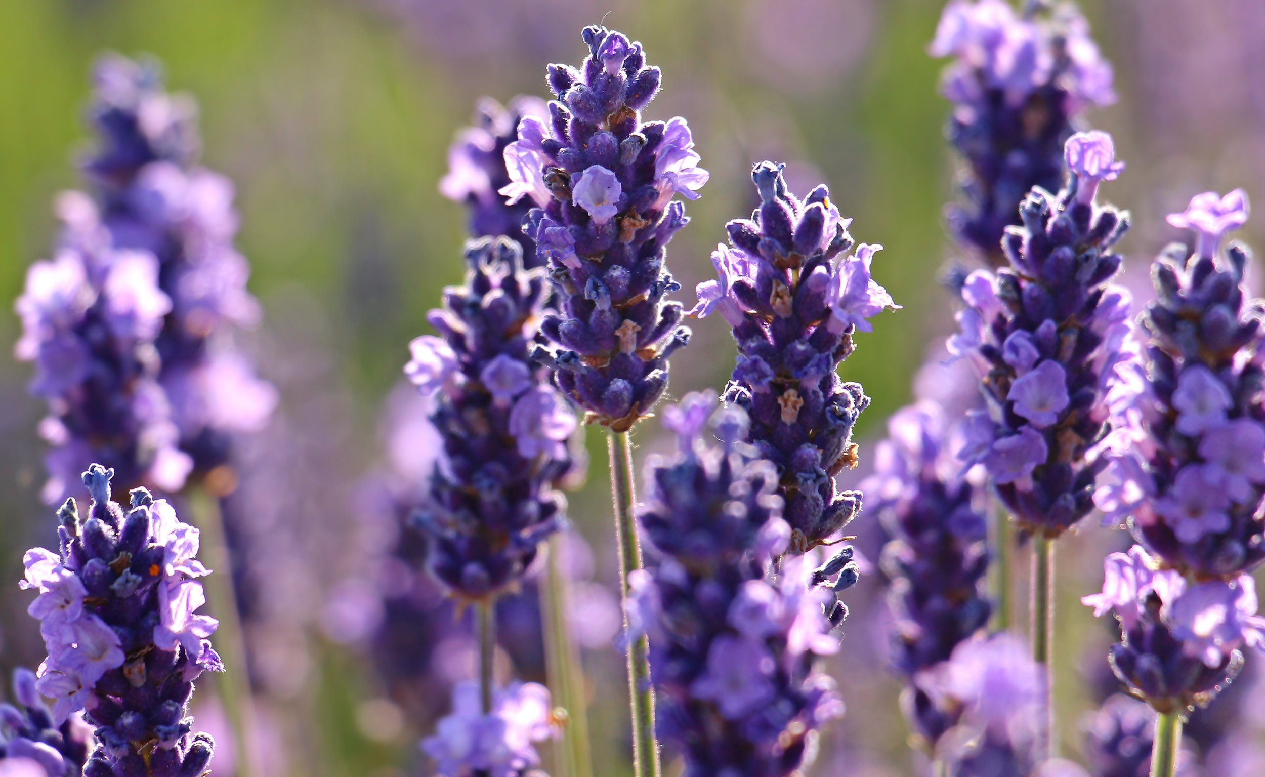 865 Candle Company - Lavender