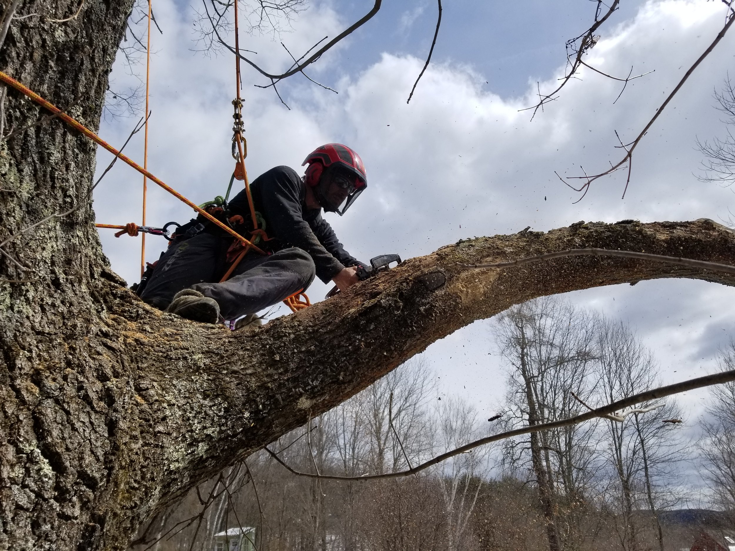 Quality and safety - Whether it's removing large dead wood from your favorite oak, pruning your apple tree, or removing that large box elder that's starting to look scary next to your house, we'll perform the work as efficiently and safely as possible. In addition to following industry safety standards, we are fully insured.Read more about our services here.